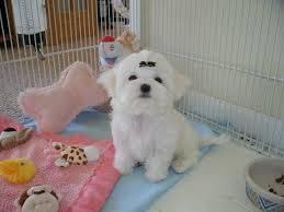 dog for sale albuquerque