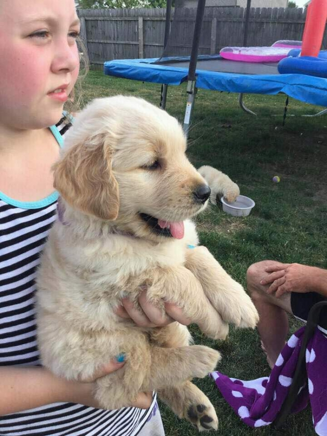 SUPER ADORABLE AFFORDABLE GOLDEN RETRIEVER PUPPIES FOR