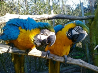 weaned baby parrots and fertile eggs for sale