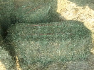 QUALITY GREEN TIMOTHY HAY FOR OUR RACING HORSES..HOT SALES!!