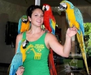 $400 : talking blue and gold macaws