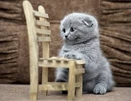 Beautiful Scottish Fold Kittens For Sale