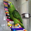GLOBAL PARROTS BREEDERS