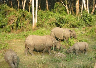 Jungle safari in Nepal - adventure and wildlife activities in national parks and reserves