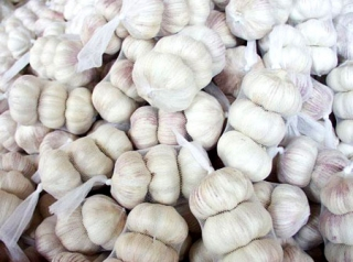 White Garlic for sell