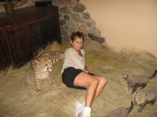 Male and Female (Cheetahs, Serval and F1 Savannah kittens)